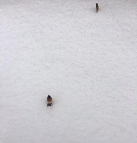 昨日那須高原は、雪が降りました。